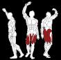 BH FITNESS L050 svalové partie
